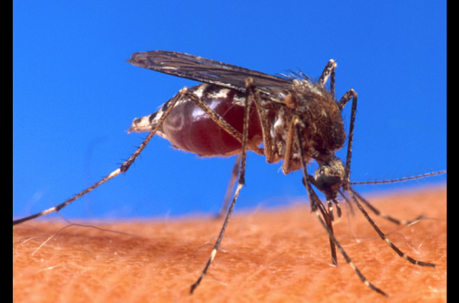 Suriname reports first case of chikungunya - Latest News - JamaicaObserver.com